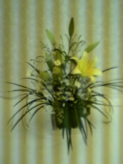 暑い毎日ですが〜黄色の花*花元気もらえます。次の合唱団練習は8/26です。待ってますね昢